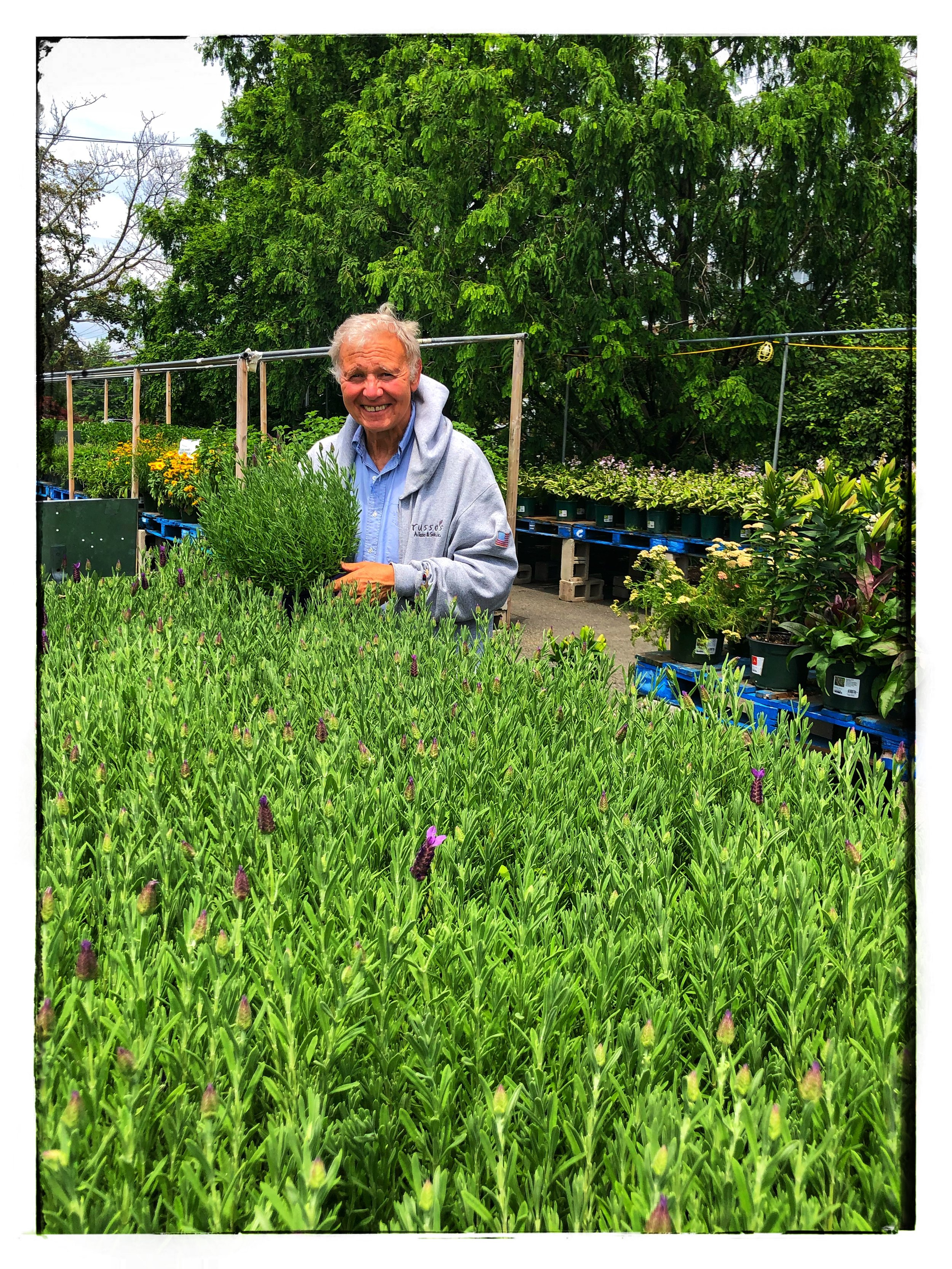 """Tony Russo with the lavender plants Russo's. Learn more with """"Tony's Tips"""" online!"""