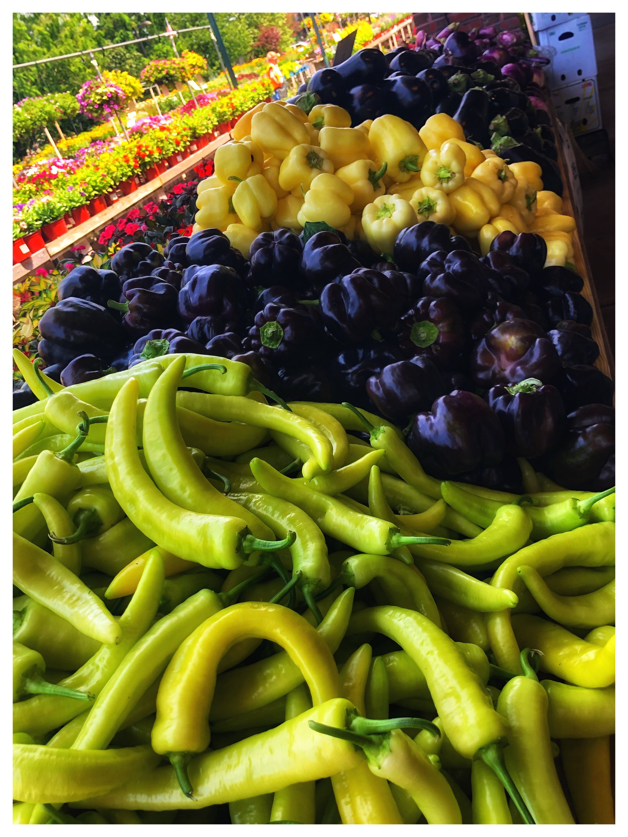 Locally grown peppers and eggplants at Russo's!