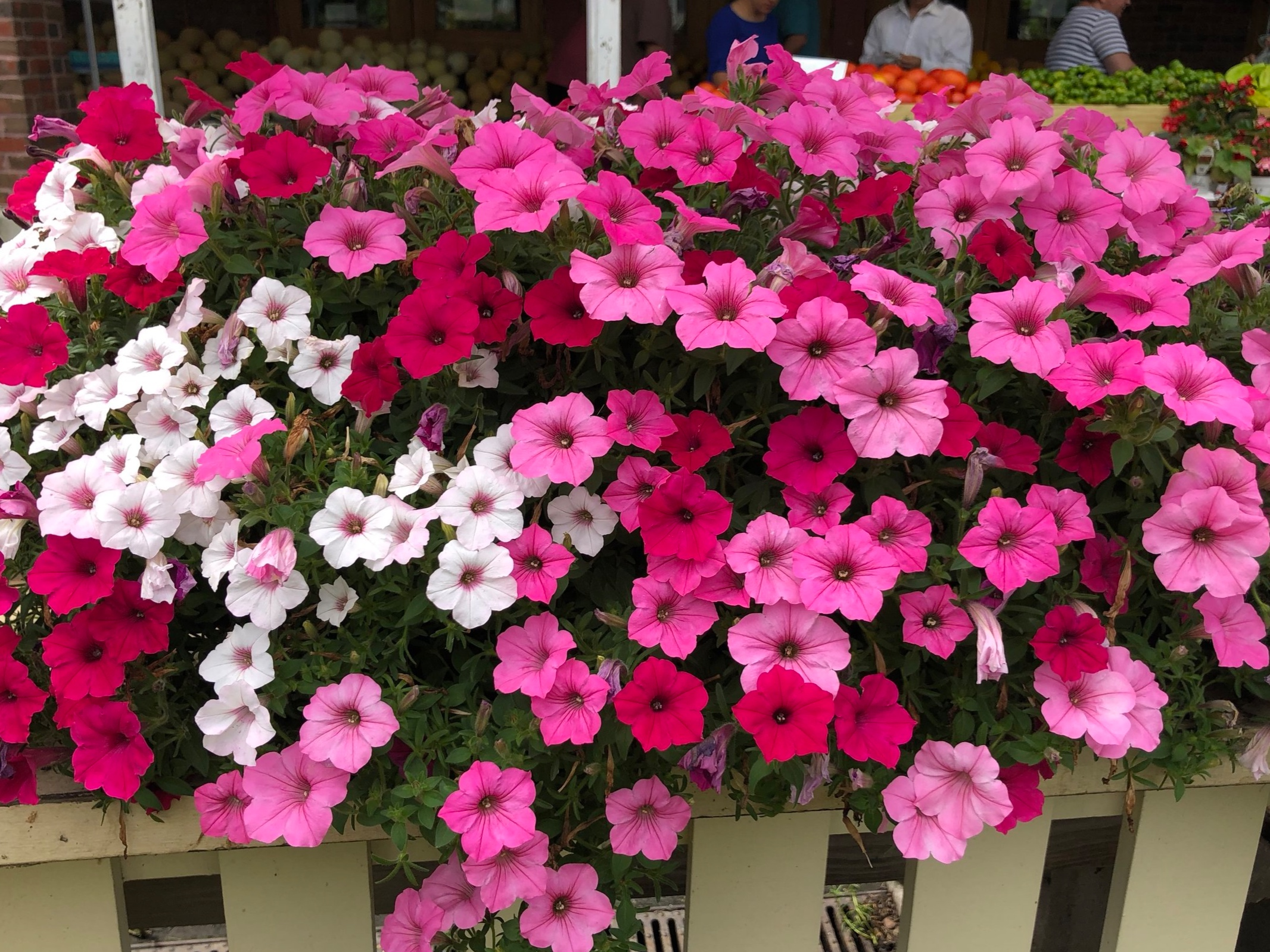 Colorful flower pots available for you and your friends!