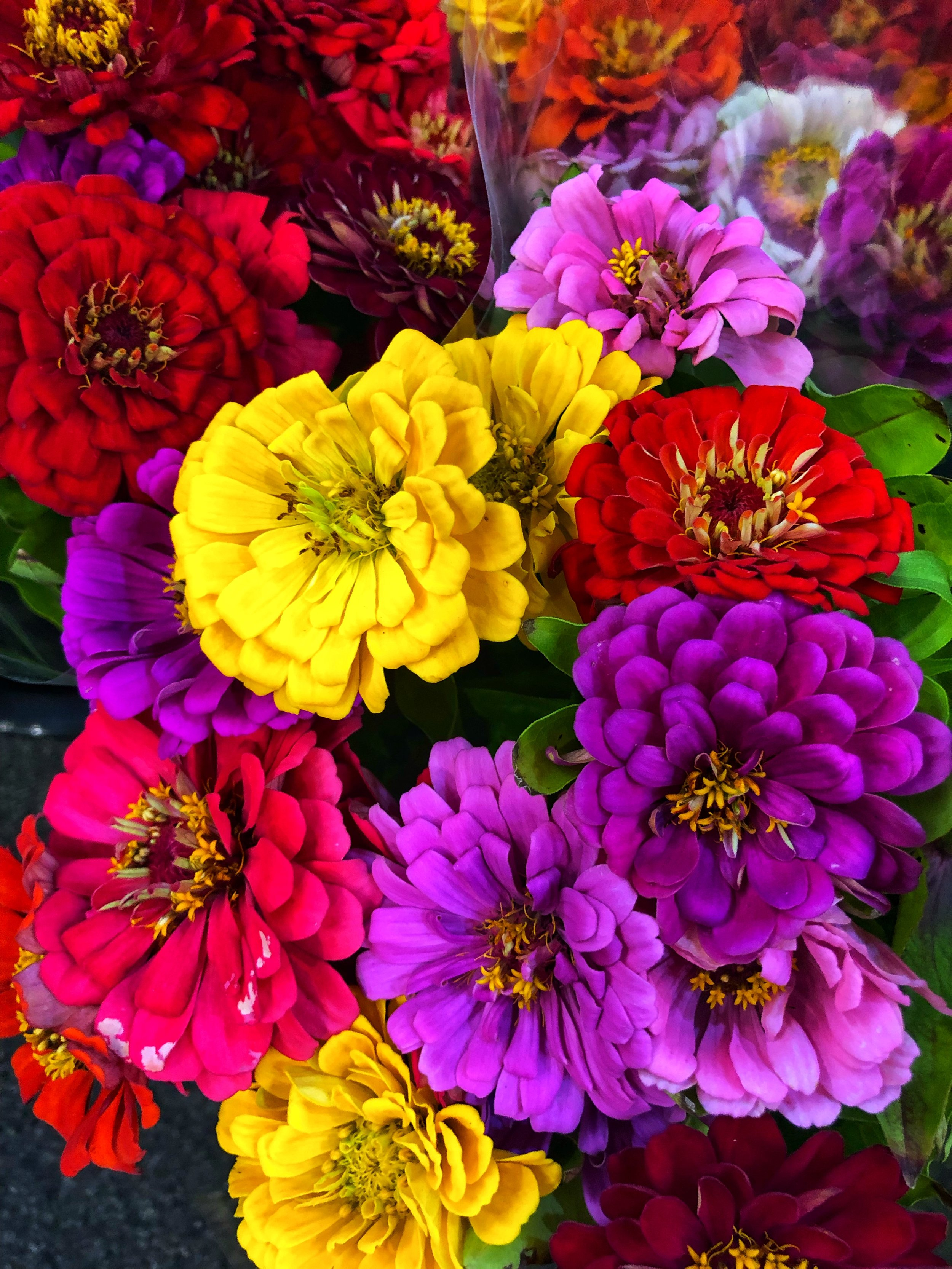 Locally grown large Zinnias in our store!