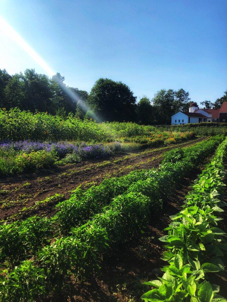 Sunlight sweeps across Clark Farm in Carlisle.
