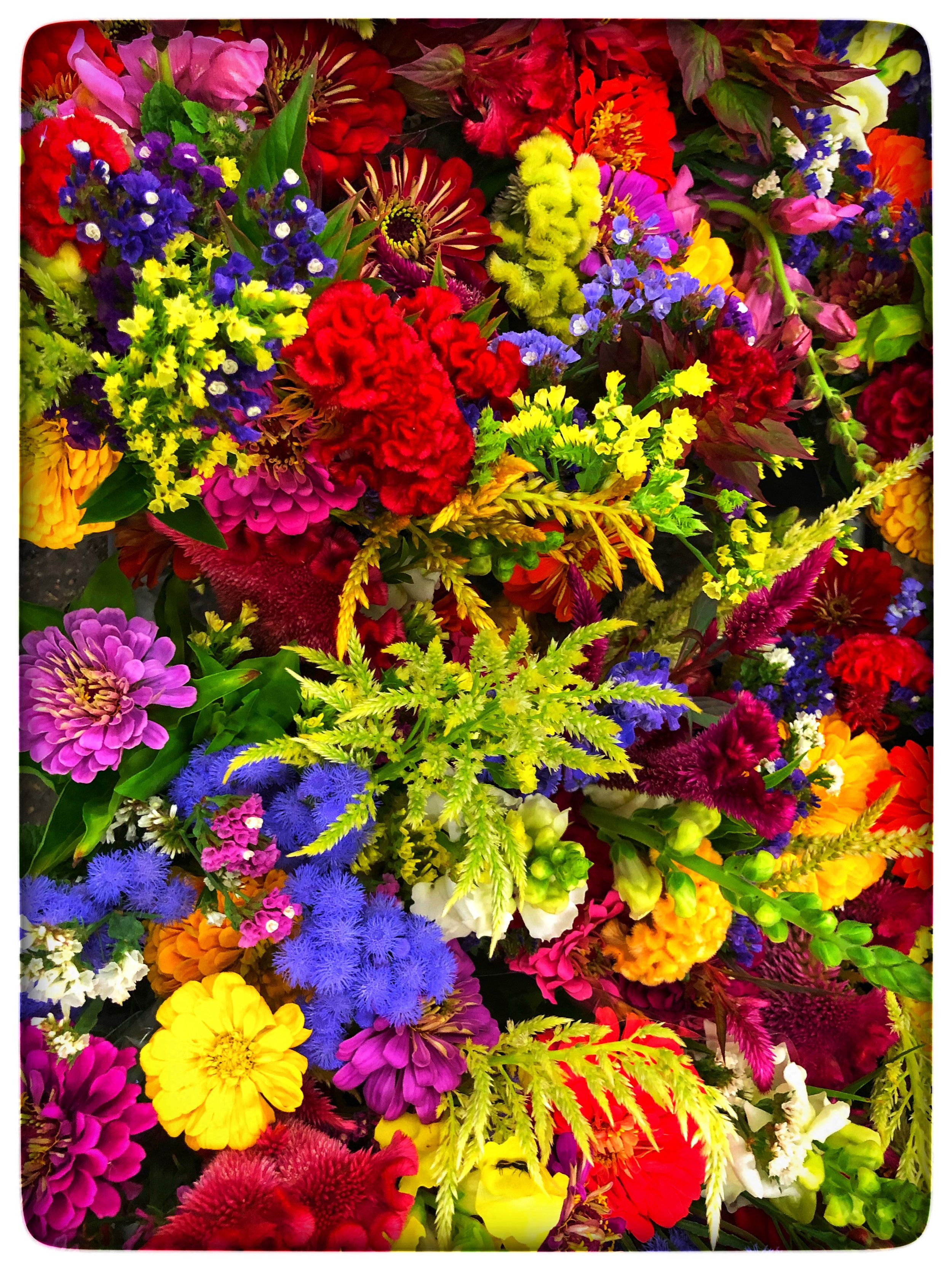 Locally grown field flowers sold exclusively to Russo's from Macone Farm in Concord.