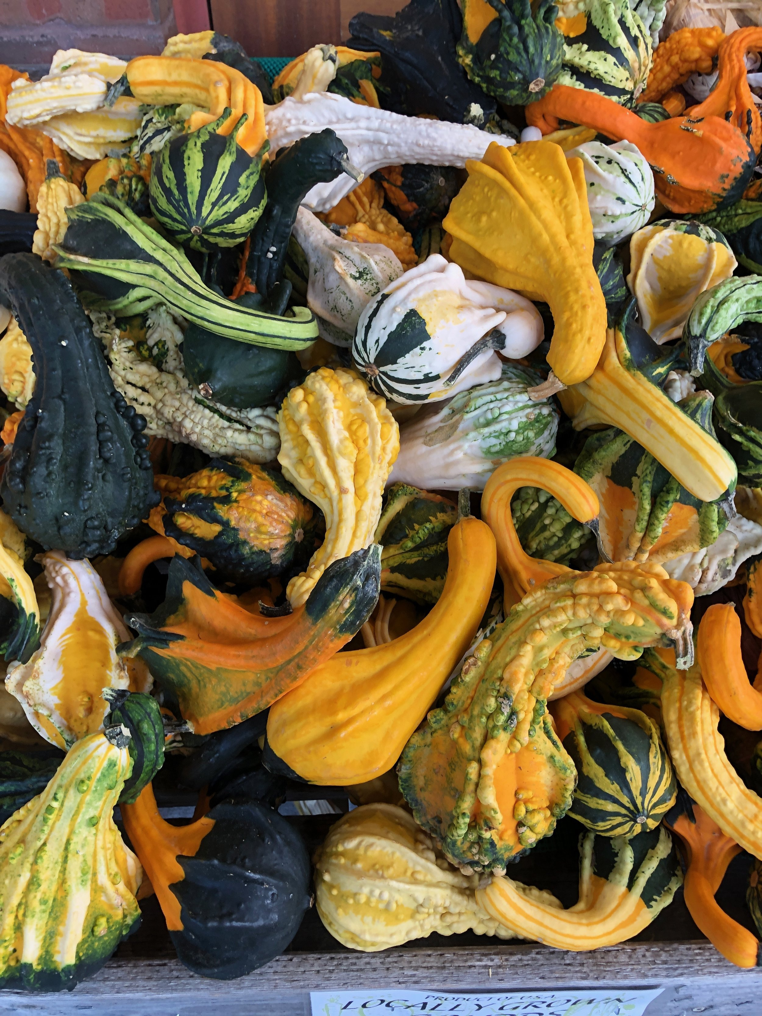 Gourds in the most autumnal of colors!