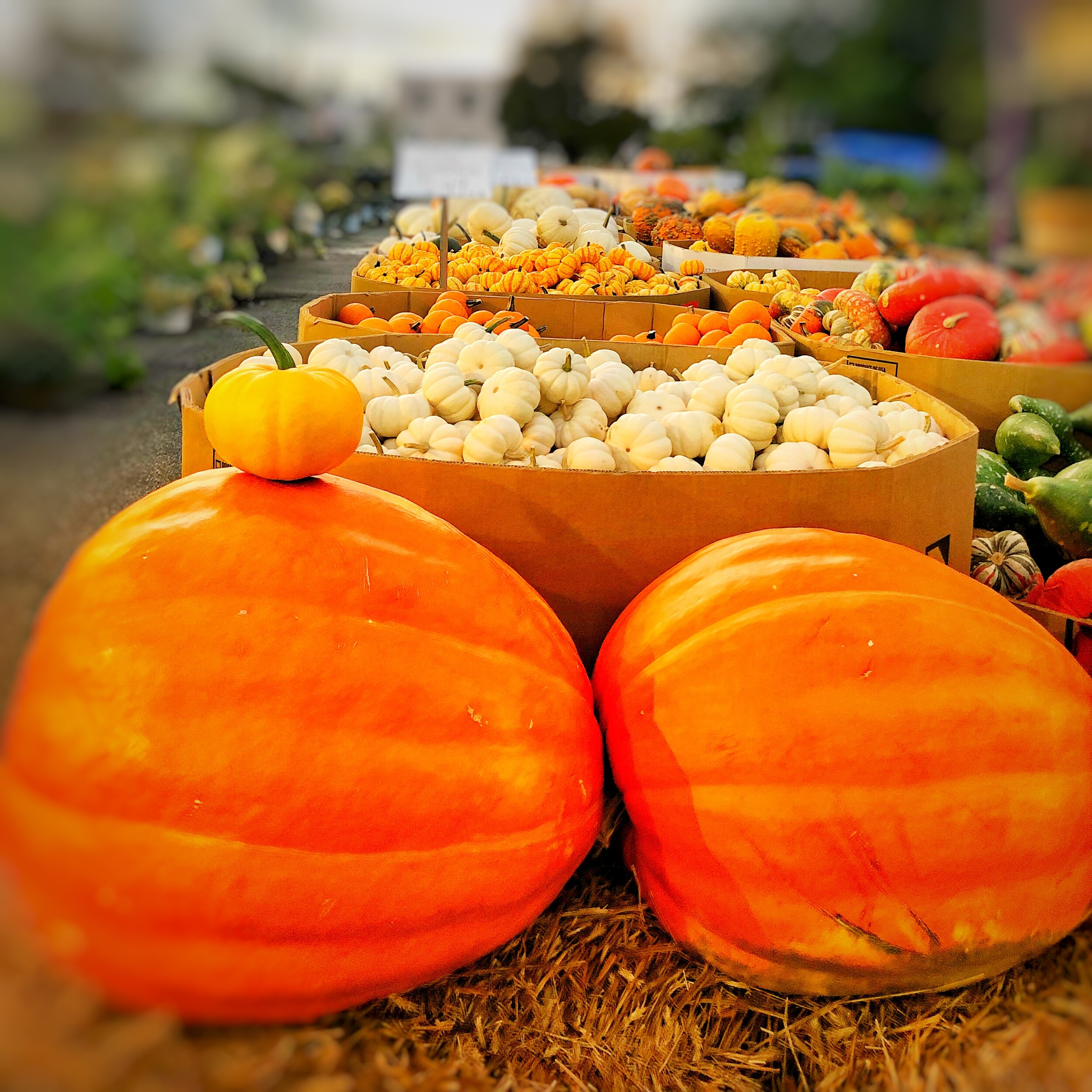 Fall is here! Enjoy the colors of the season with pumpkins, gourds and more.