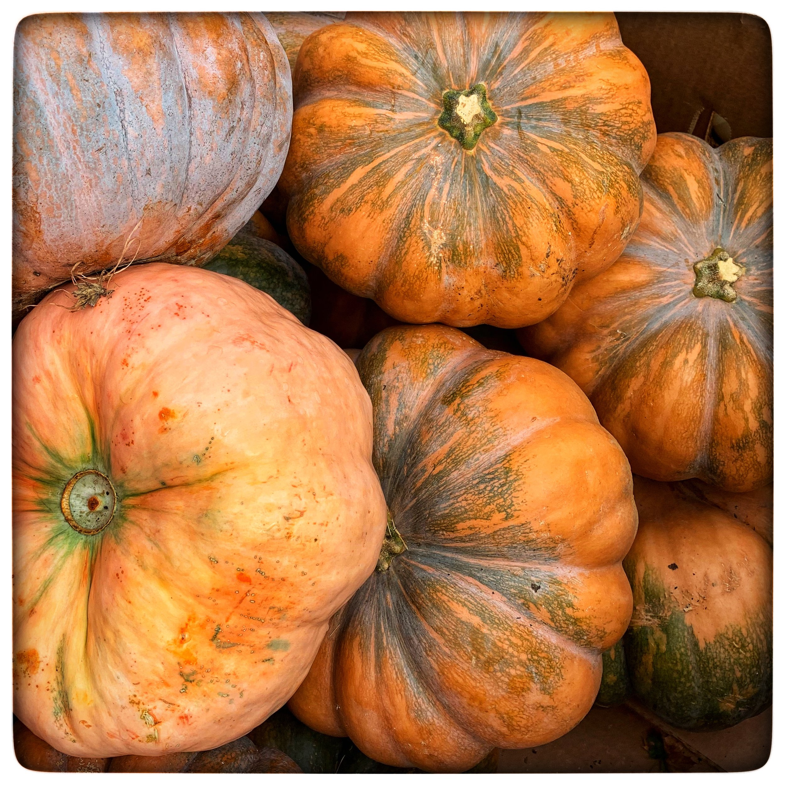 Love the varieties of colors and shapes with this year's pumpkins at our store!