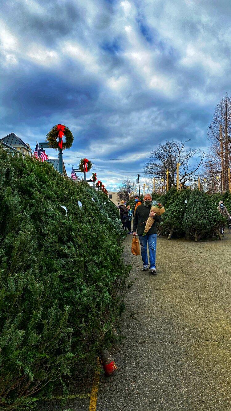 Tony Russo amongst the Christmas Trees.