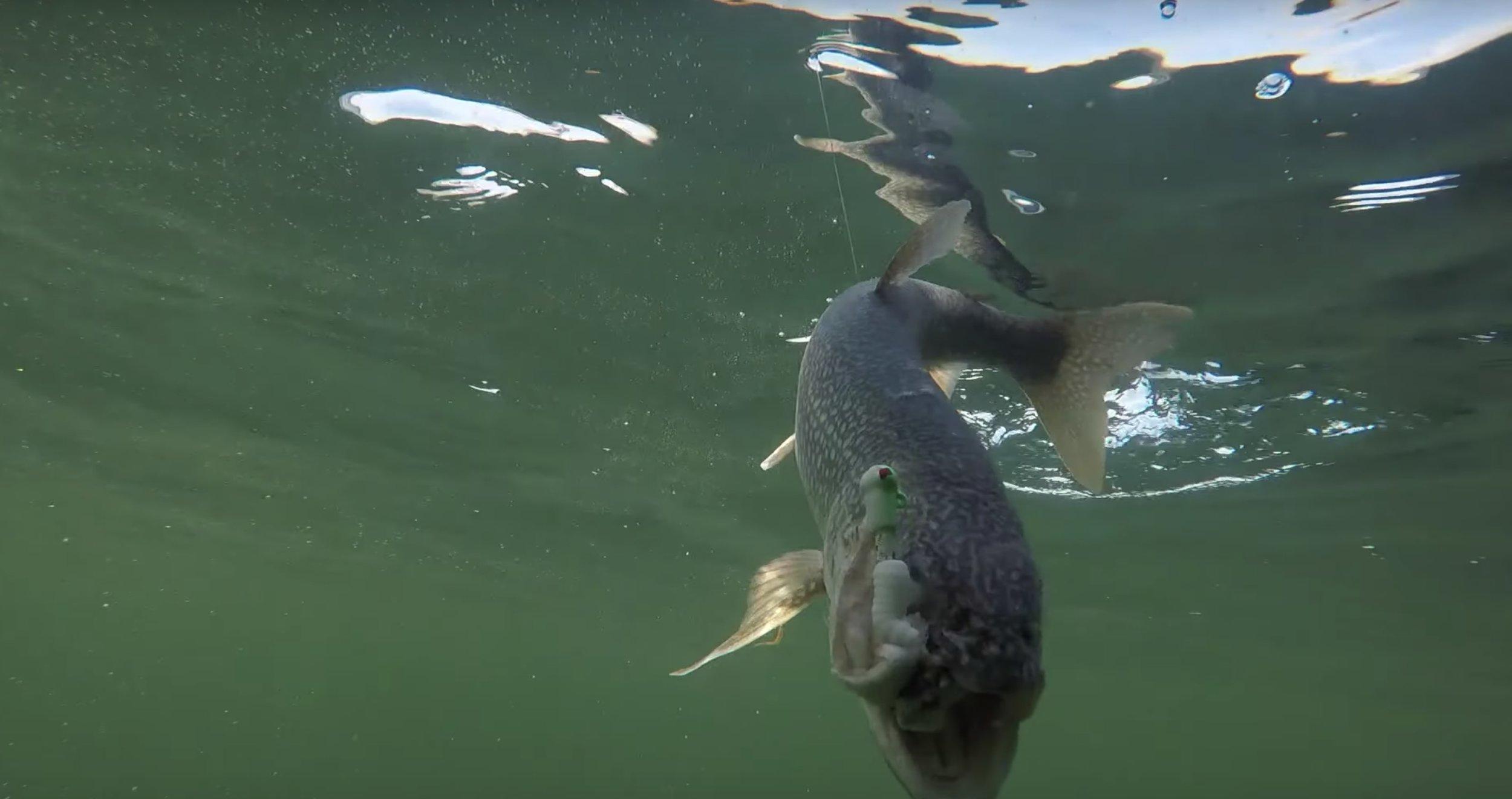 3/4 oz Popeye jig when jigging for lake trout.