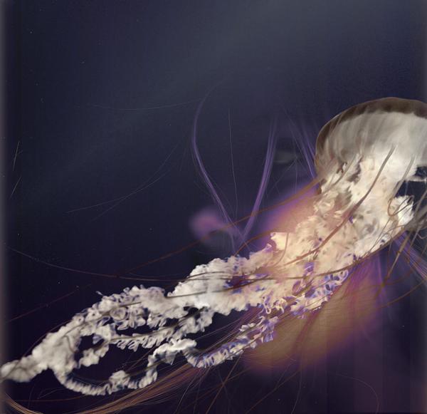 Deep Sea Projection (2011)