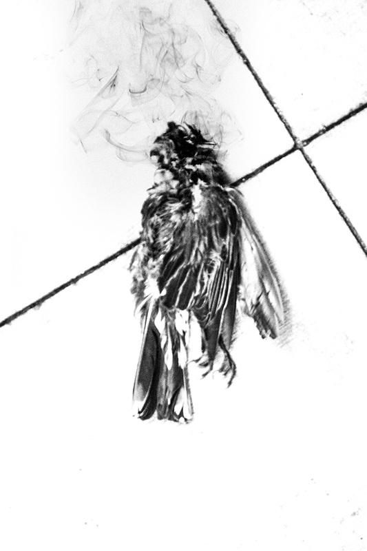 Bird Christ (2013)