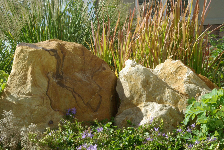Boulder-grass1.jpg
