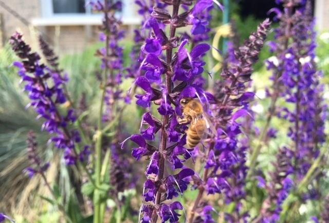 Bee-Caradonna.jpg