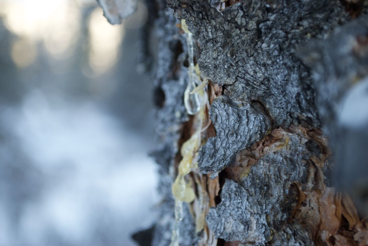 tree-bark.jpeg