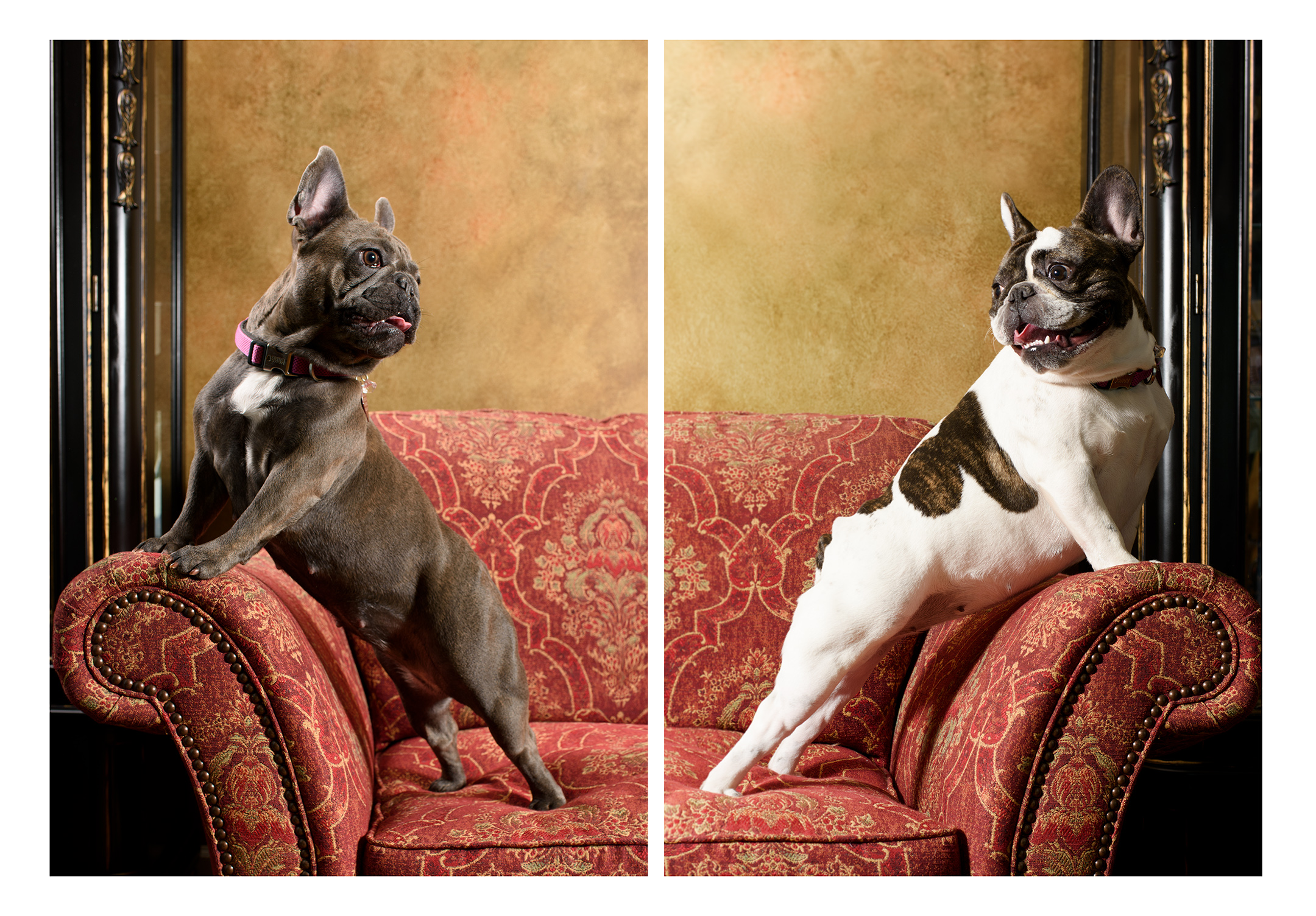 bella_and_zoey_diptych.jpg