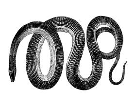 SNAKE-logo.png
