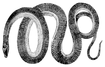 Canon Code Snake.jpg
