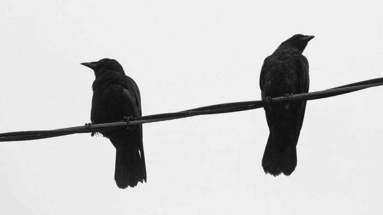 Birds phobia