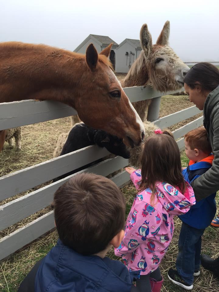 Mrs. Murray's Nursery School - Farm Field Trip