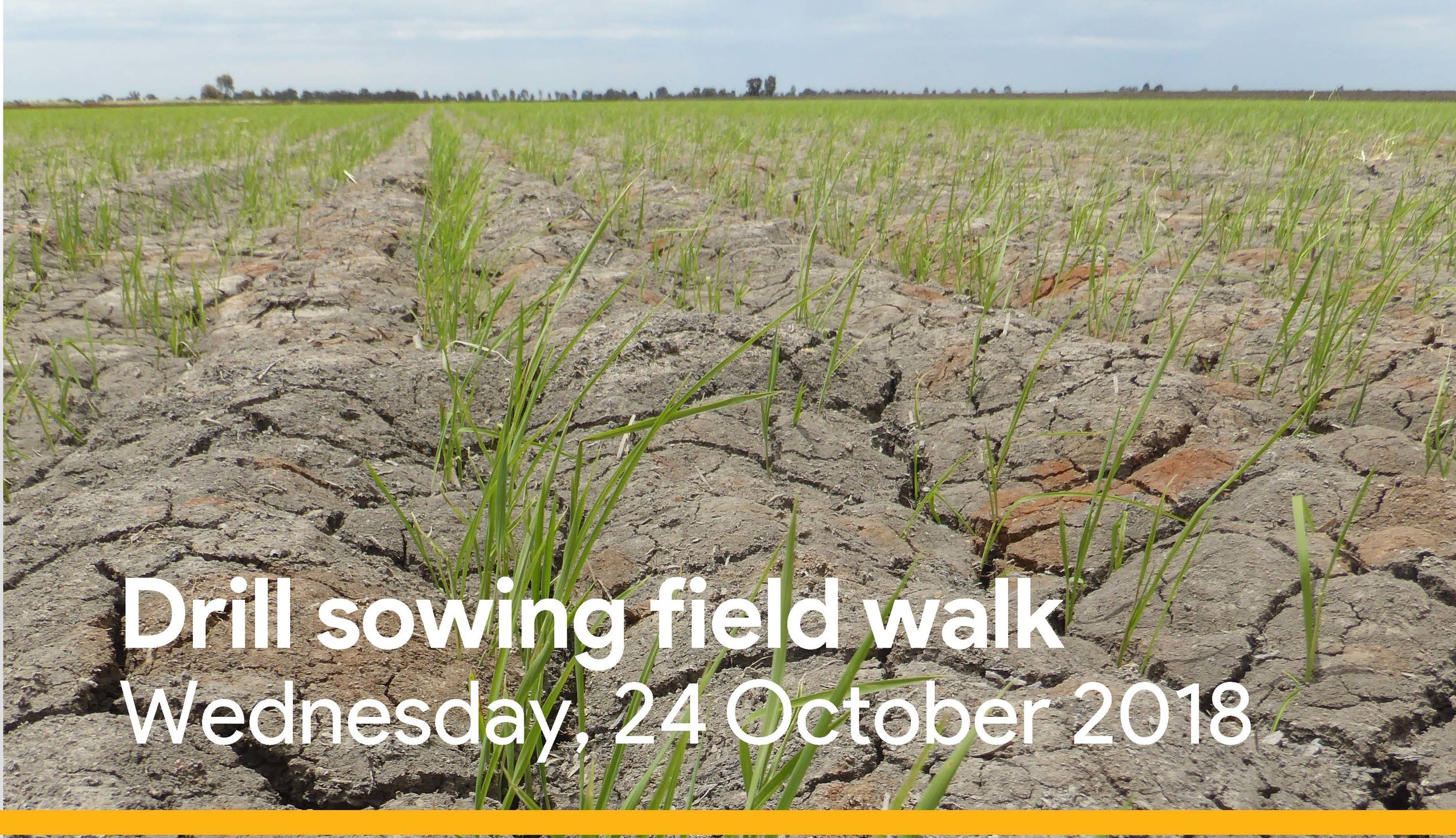 Drill sowing field walk Coly flyer.jpg