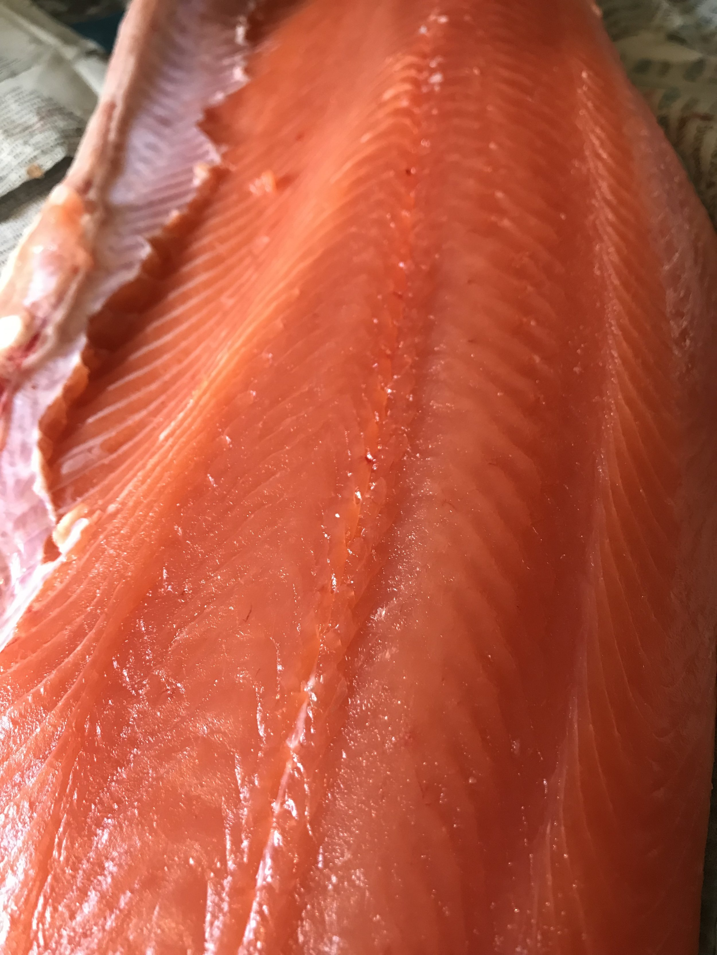 Wild King Salmon fillet caught fishing in Seattle