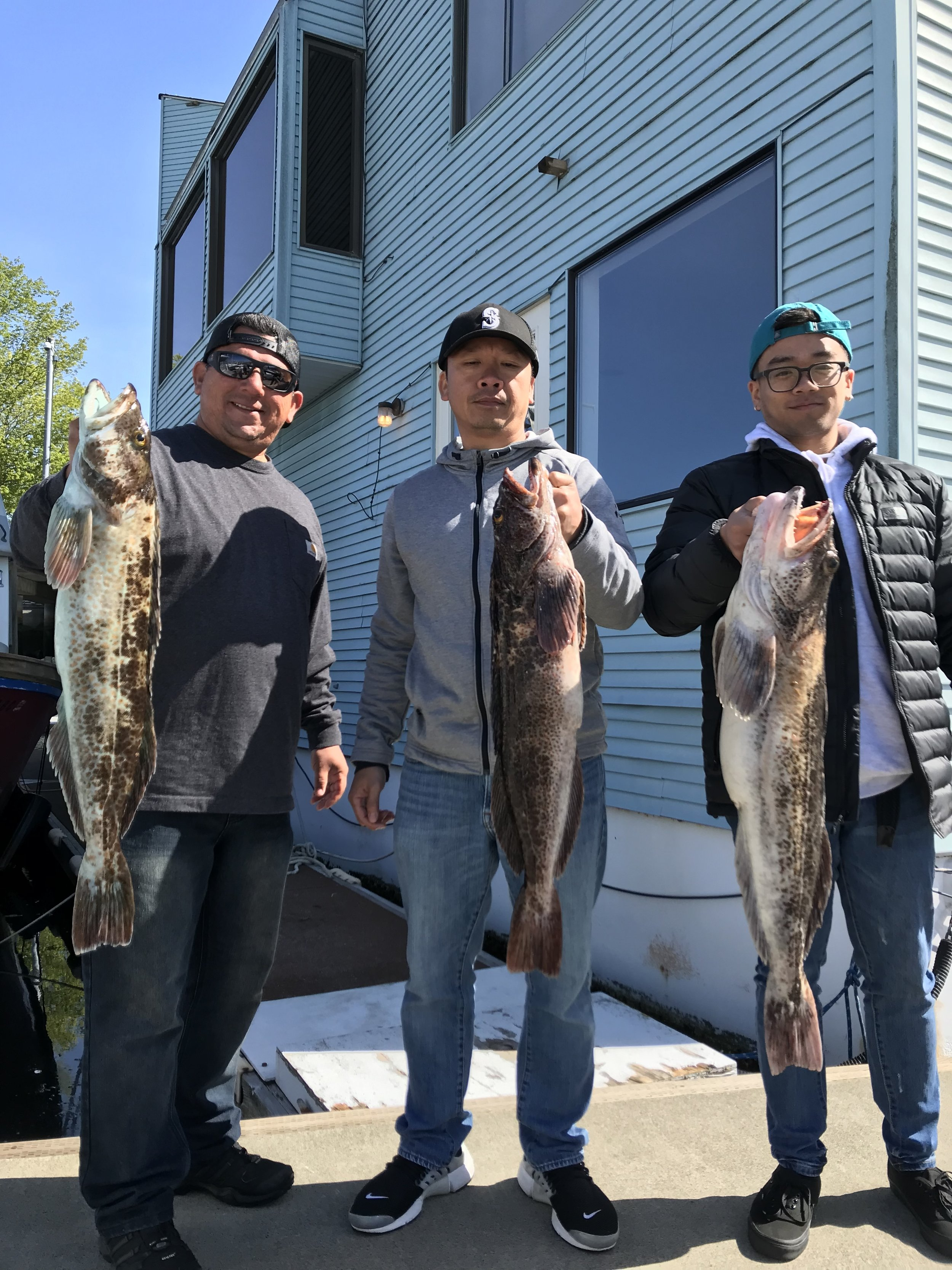 A nice limit of Seattle lingcod!