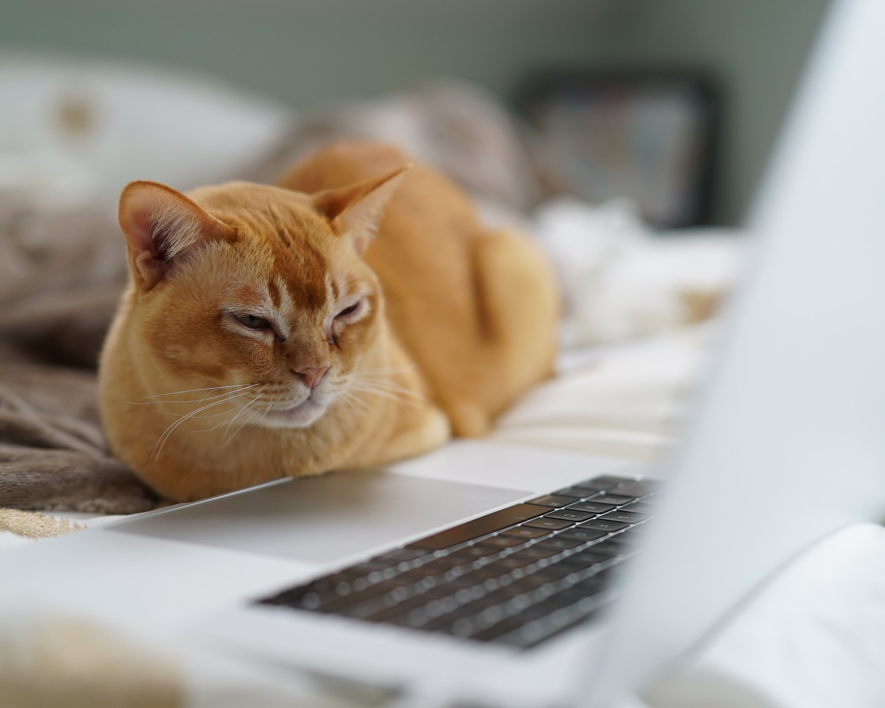A supportive cat staring at a computer. Online counseling offers an effective way to work with a gender therapy specialist in North Carolina. Begin gender counseling or trauma therapy online with Vered Counseling anywhere in NC.
