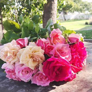 Rose Lover 2.png