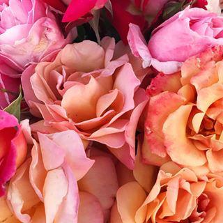Rose Lover 4.png