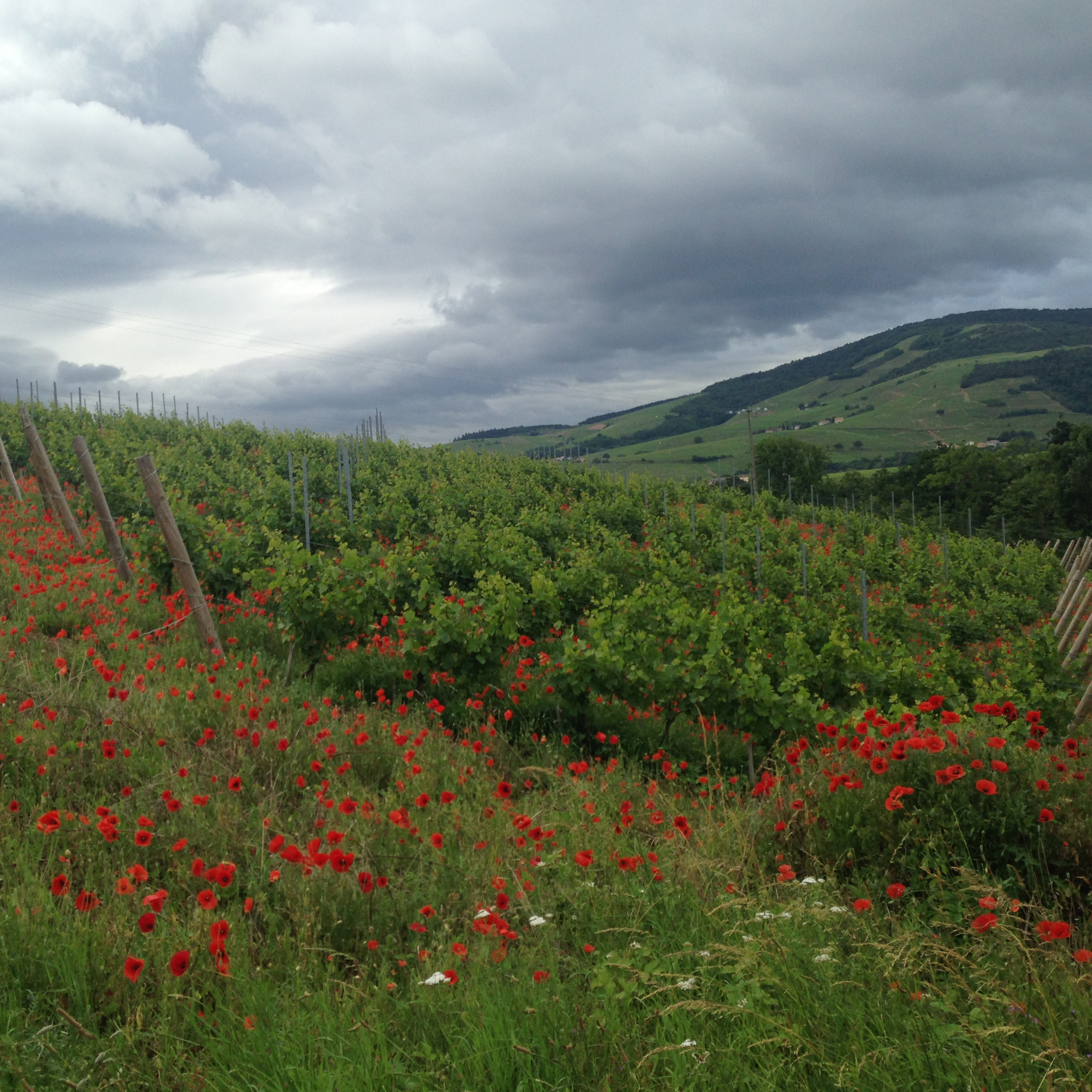 flowers-vineyards.jpg