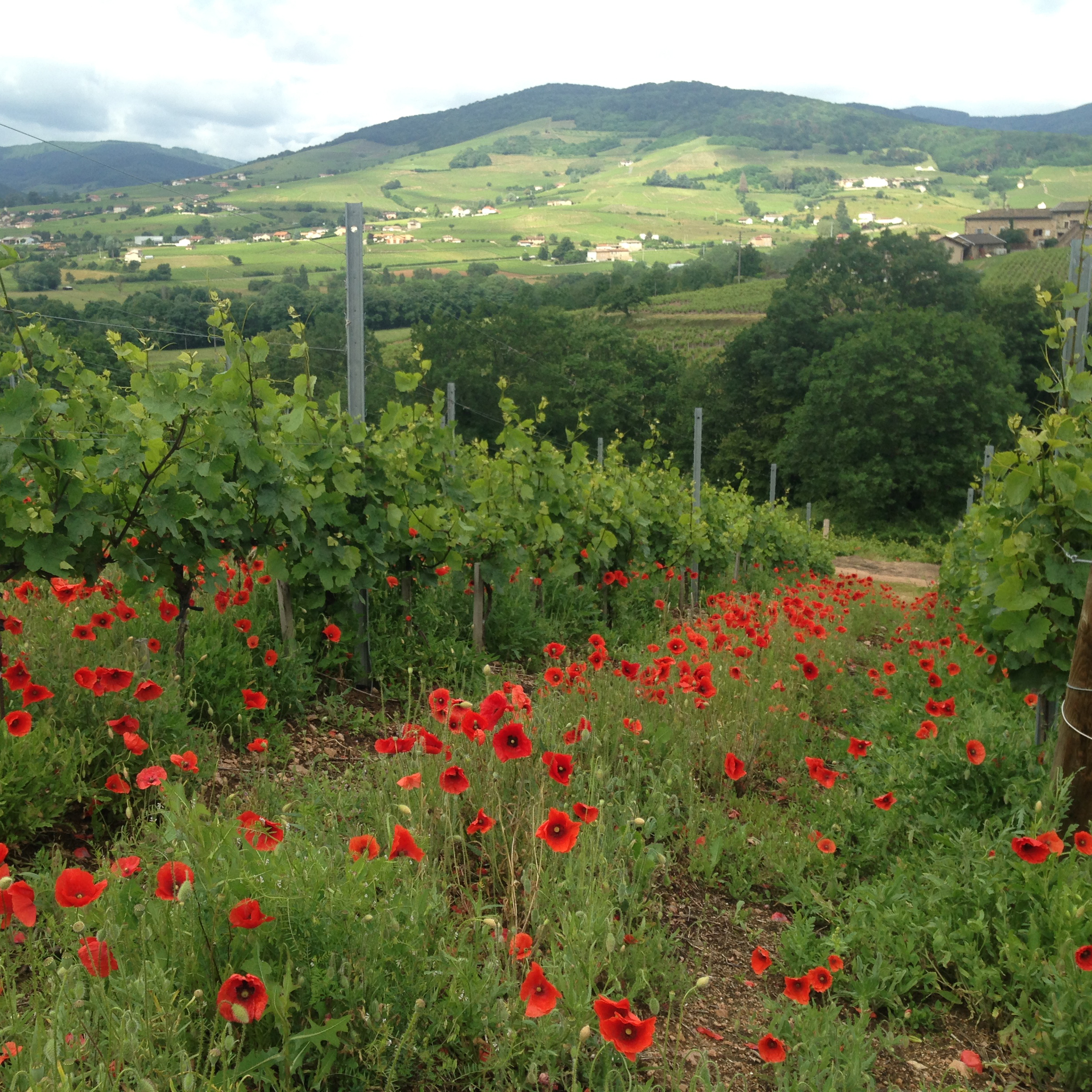 flowers-vineyards-2.jpg