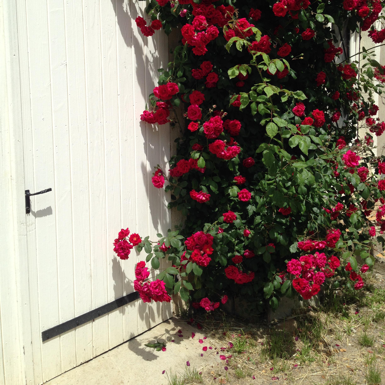 flowers-door.jpg