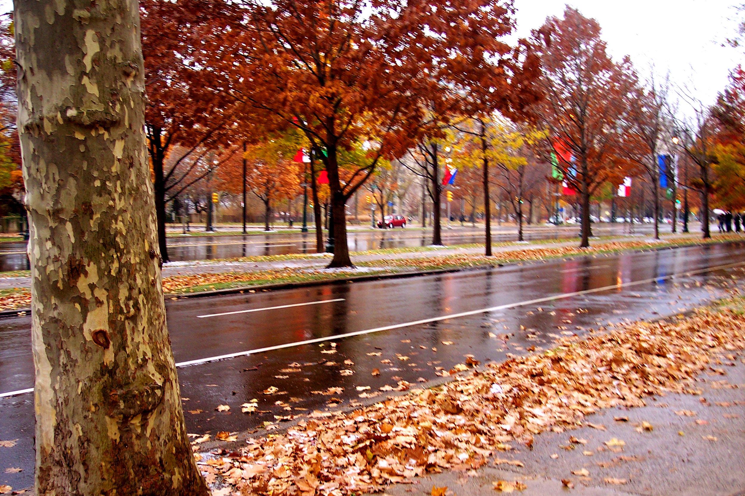 P_002_Fall Rain.jpg