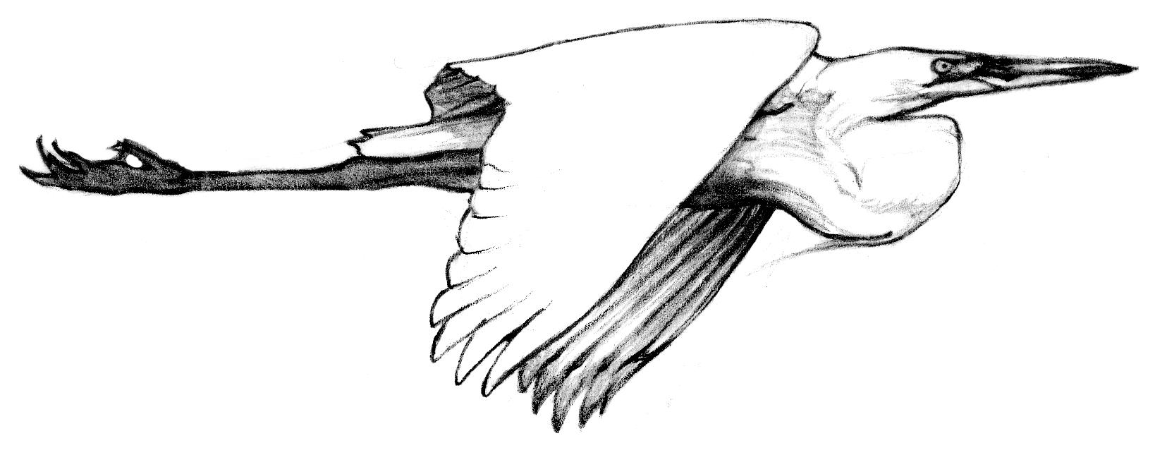 MSegretflying.png
