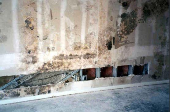 Small amounts of airflow over time result in some of the most catastrophic building mold failures.