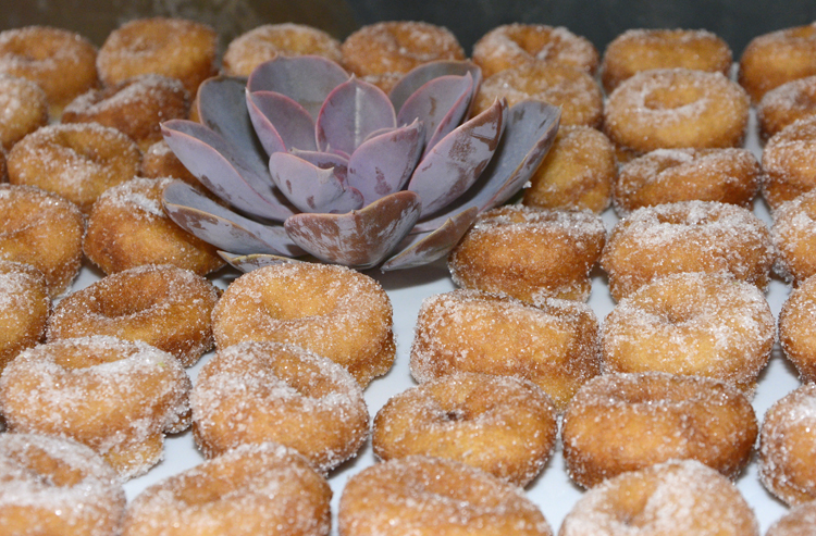 doughnuts copy