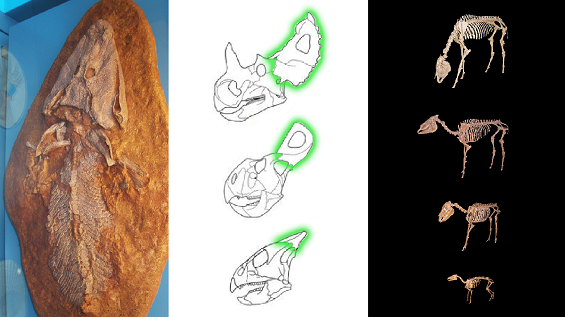 transitional fossil thumbnail v2.2.png