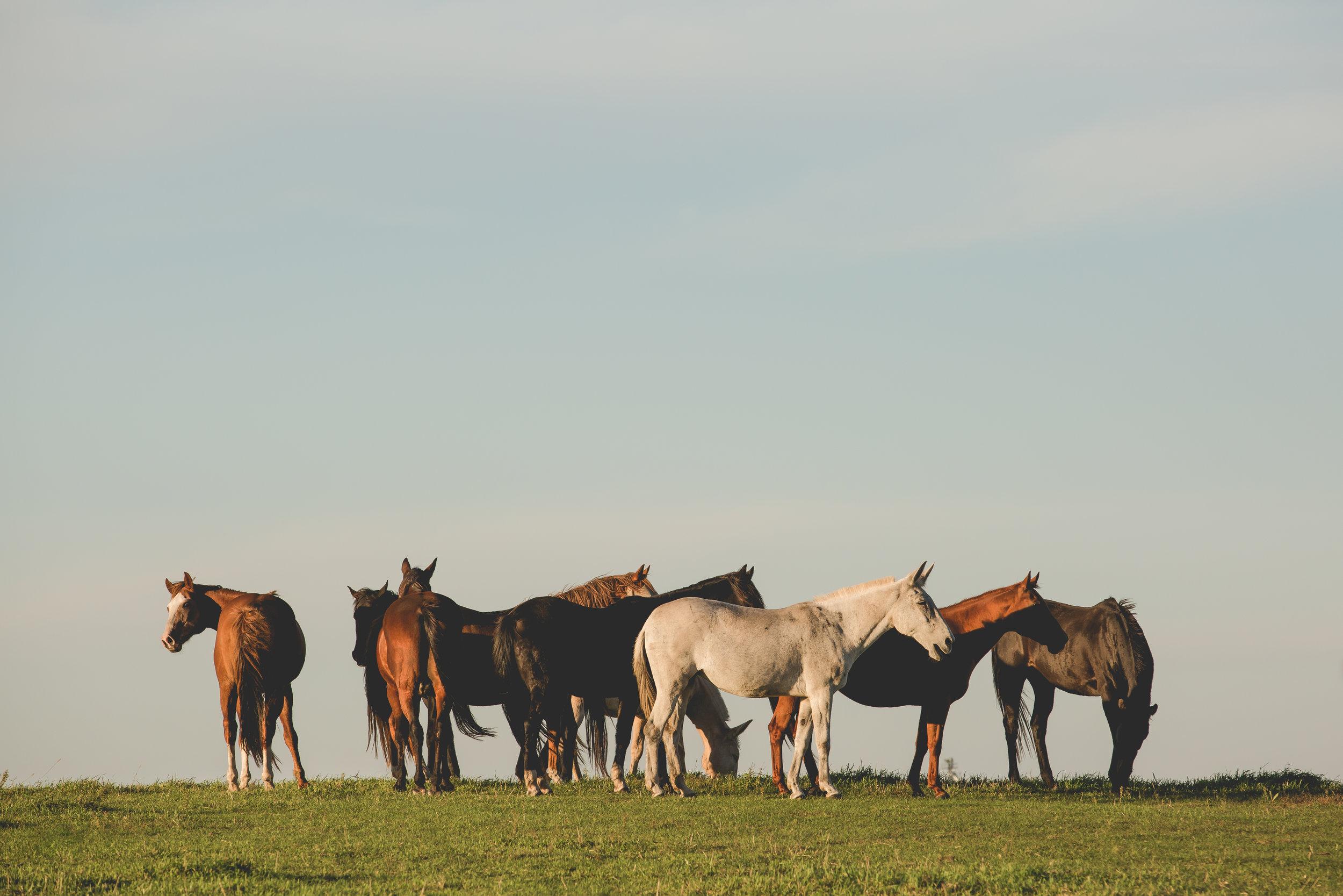 Horse Boarding | Minneapolis