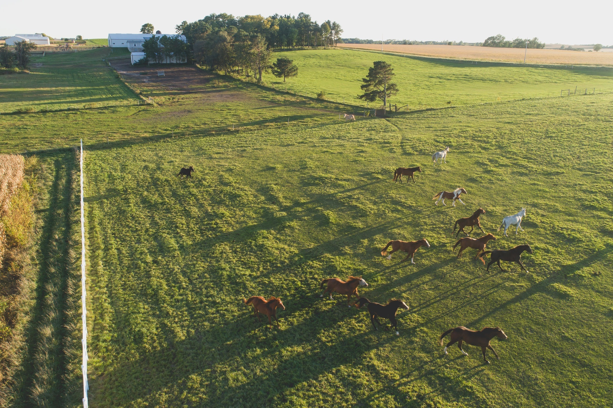 Pasture care and maintenance to create the healthiest pastures in the Twin Cities.