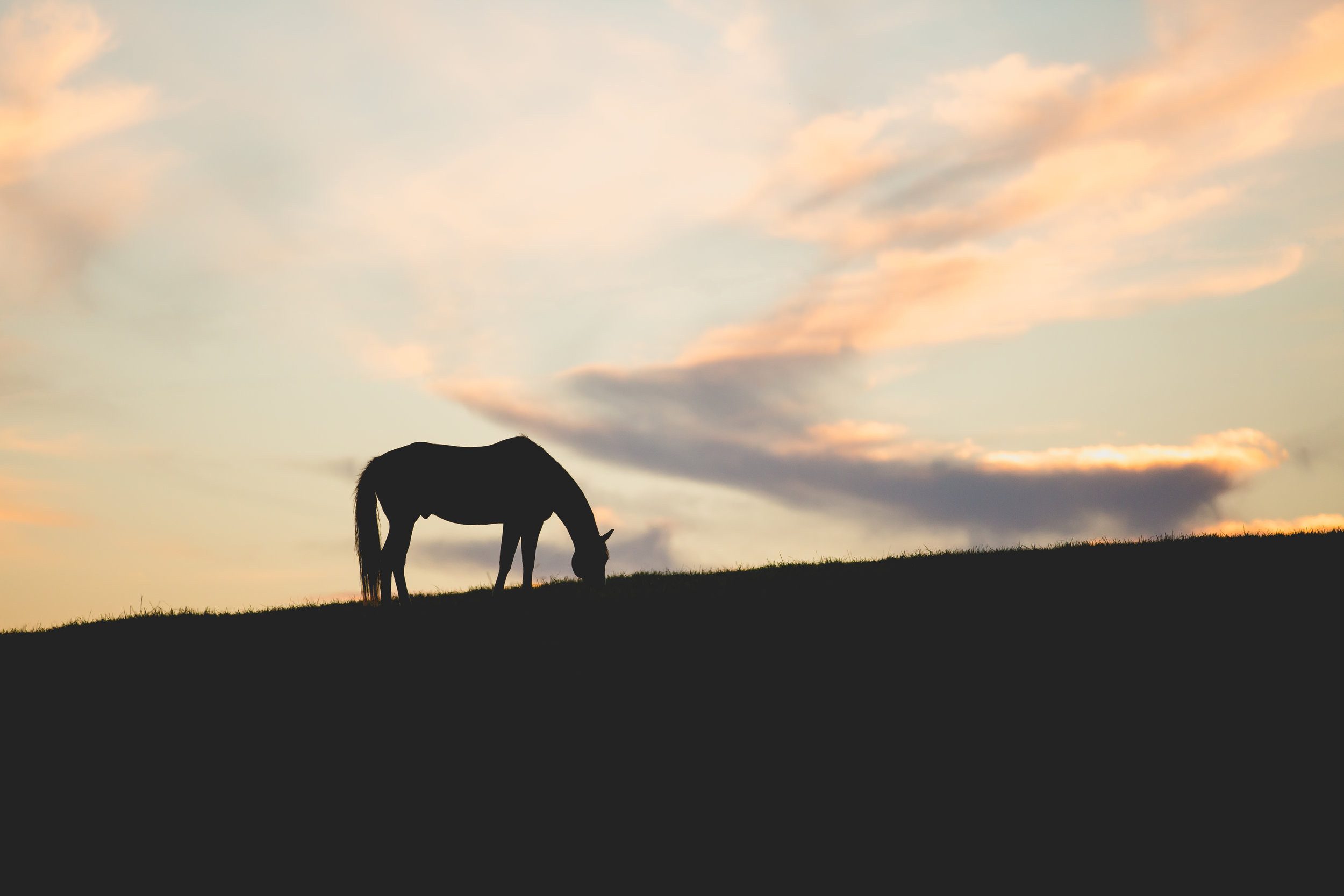HIgh Res Ranch Fall Shoot 2018 060.jpg