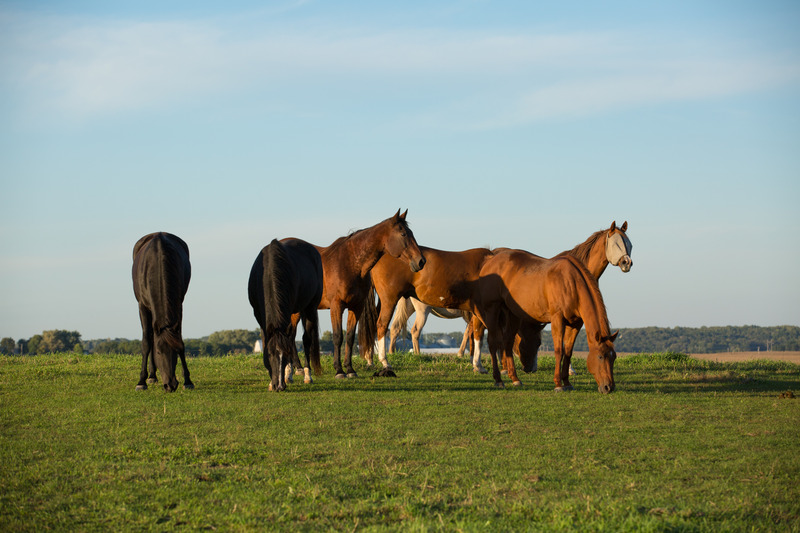 Horse Boarding   Minnesota