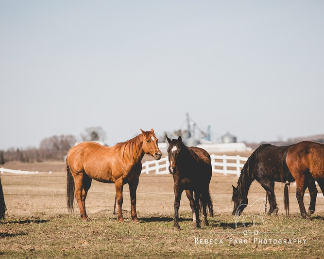 horse+6.jpg