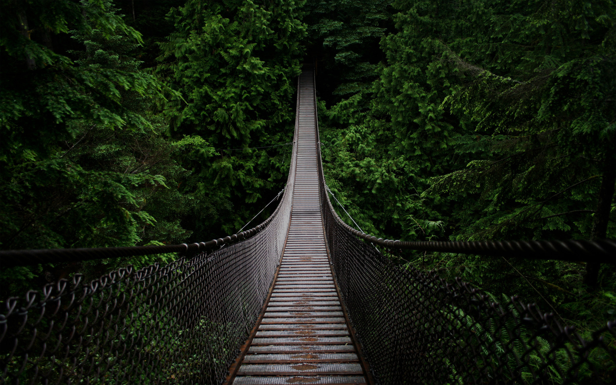 """<font size=""""4"""">CANOPY WALKS</font><strong>Bridge and walkways set high in the canopies.</strong><a> LEARN MORE →</a>"""