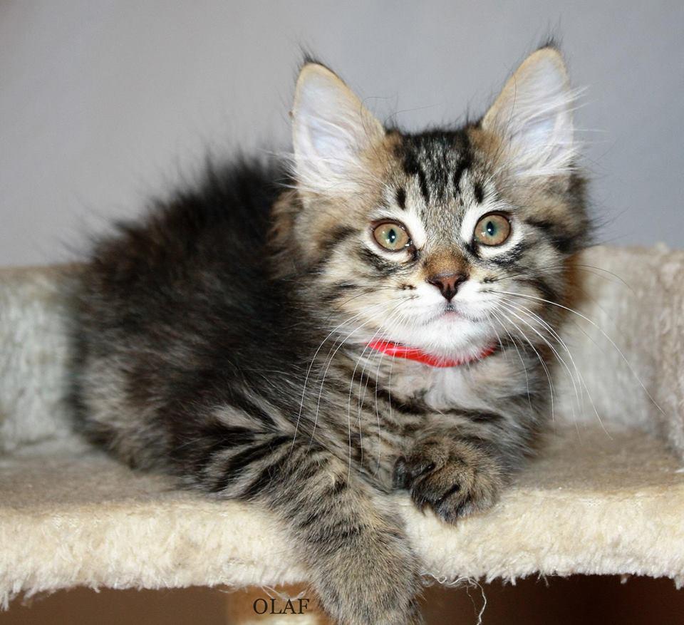 tiger kitty.jpg