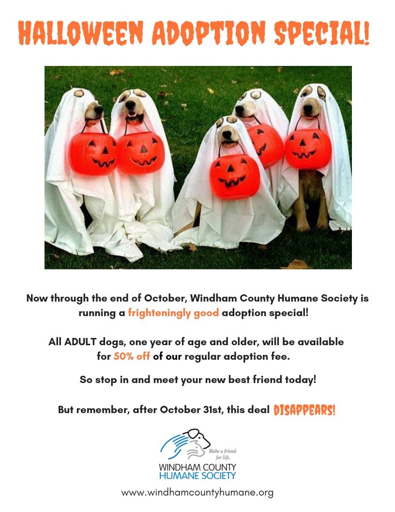 Halloween Adoption Special!.jpg