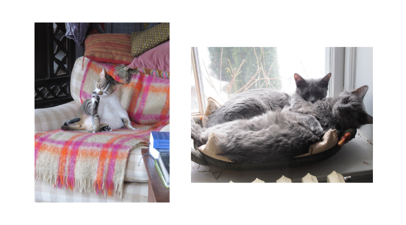 catties.png