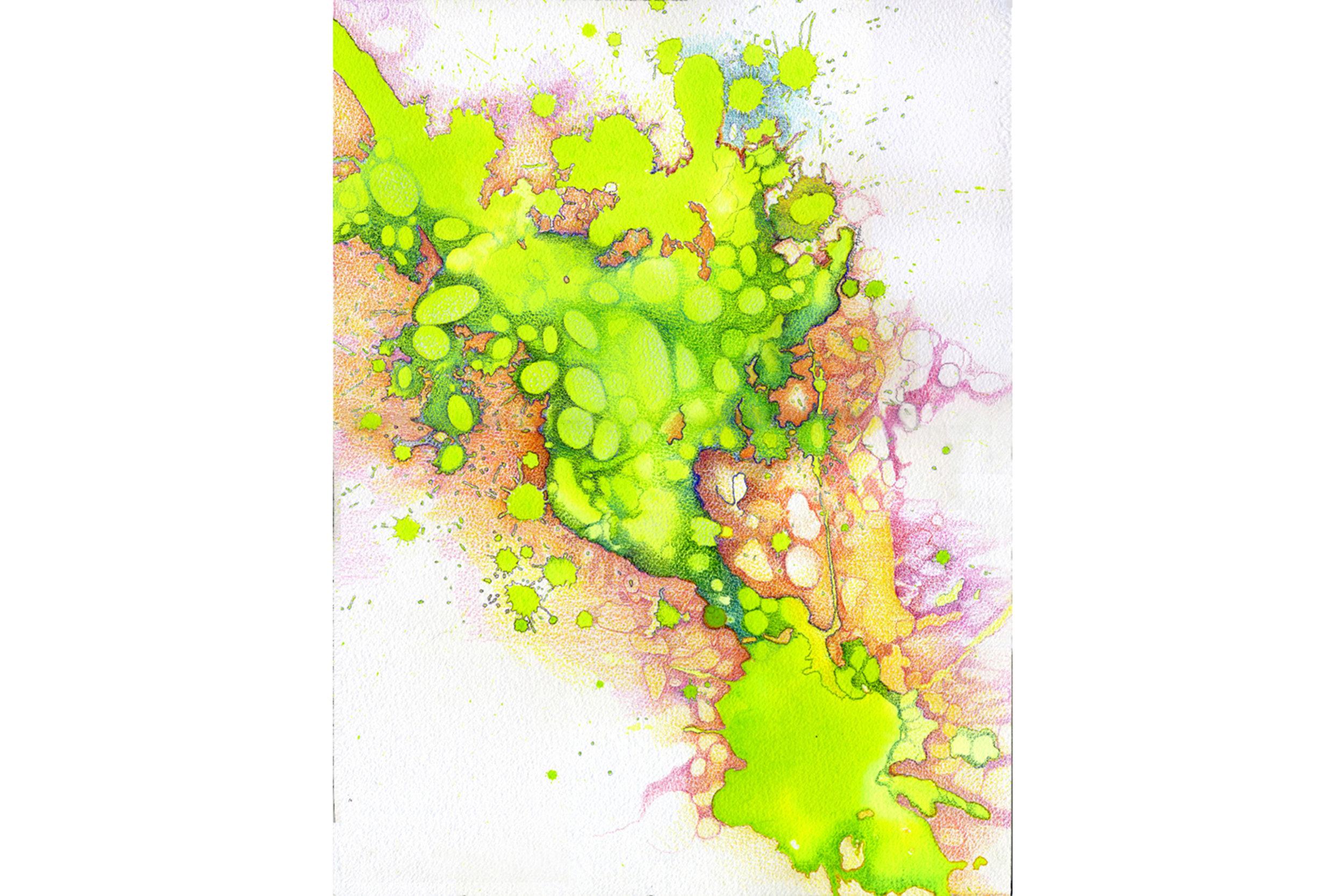 Algae Influence