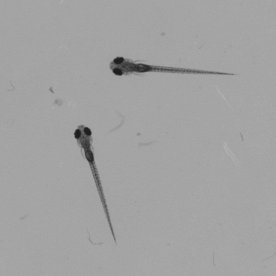 Zebrafish+-+Single+Frame+08_08.jpg