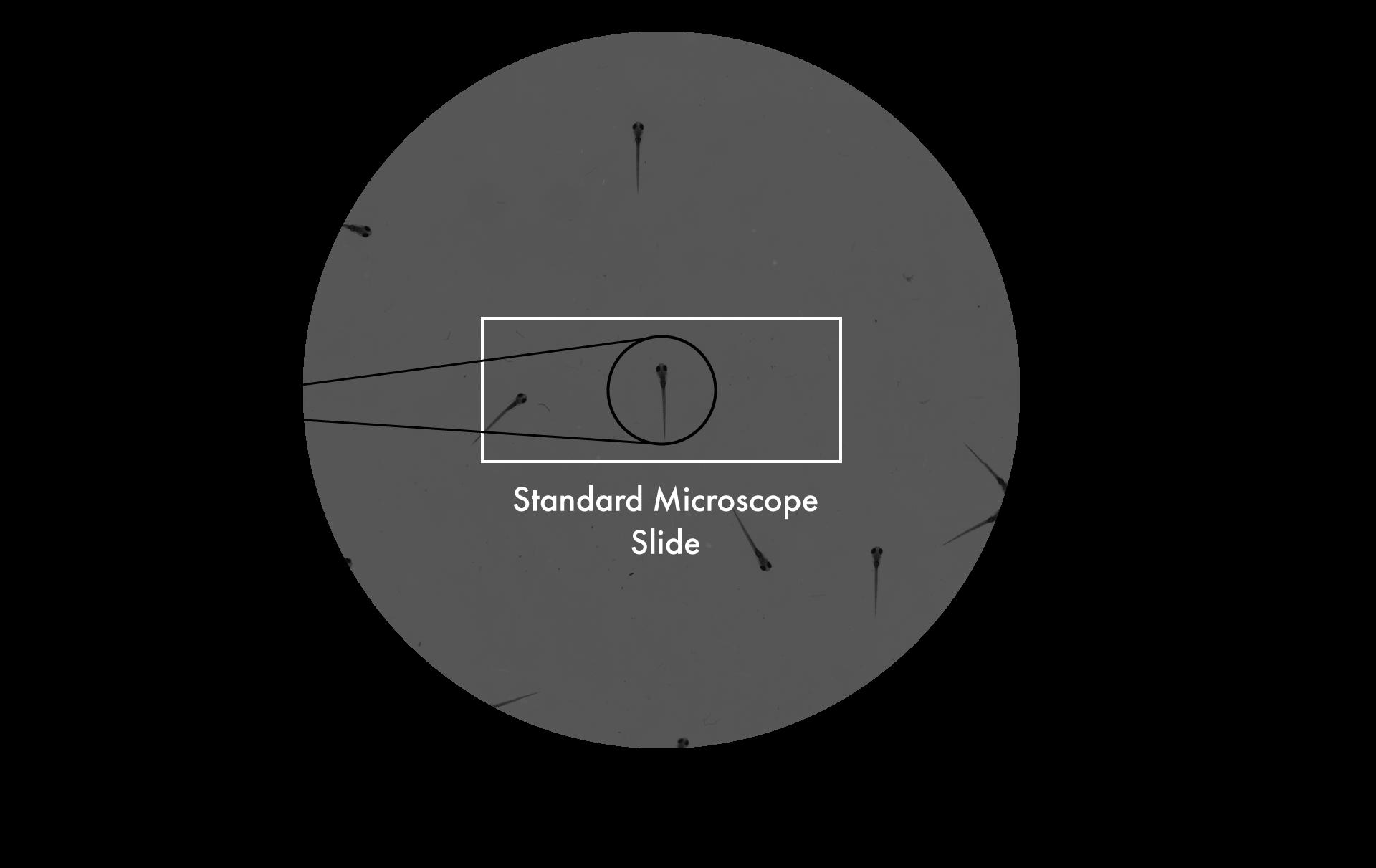 Microscope-Comparison-1.png