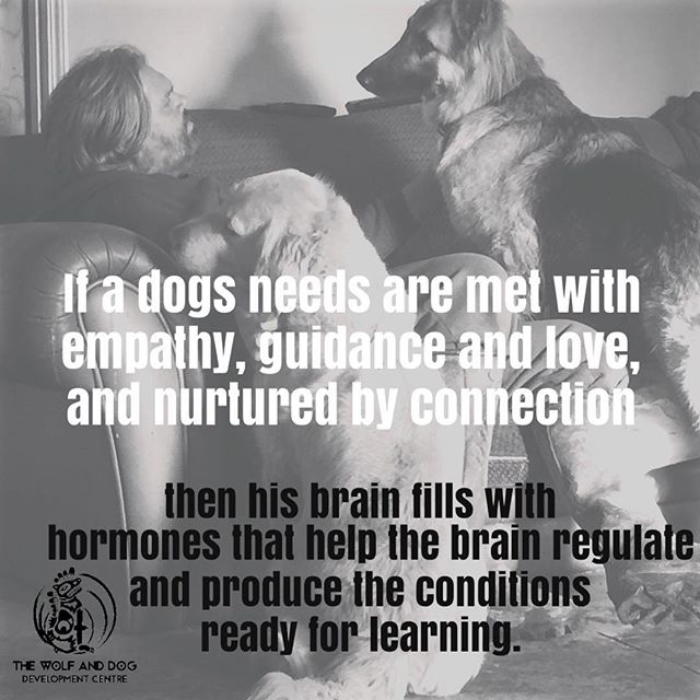 #thewolfanddogdevelopmentcentre #shaunellis #dogbehaviour #rehabilitation #dogschool #germanshepherd #socialdevelopment #emotionaldevelopment #cornwall