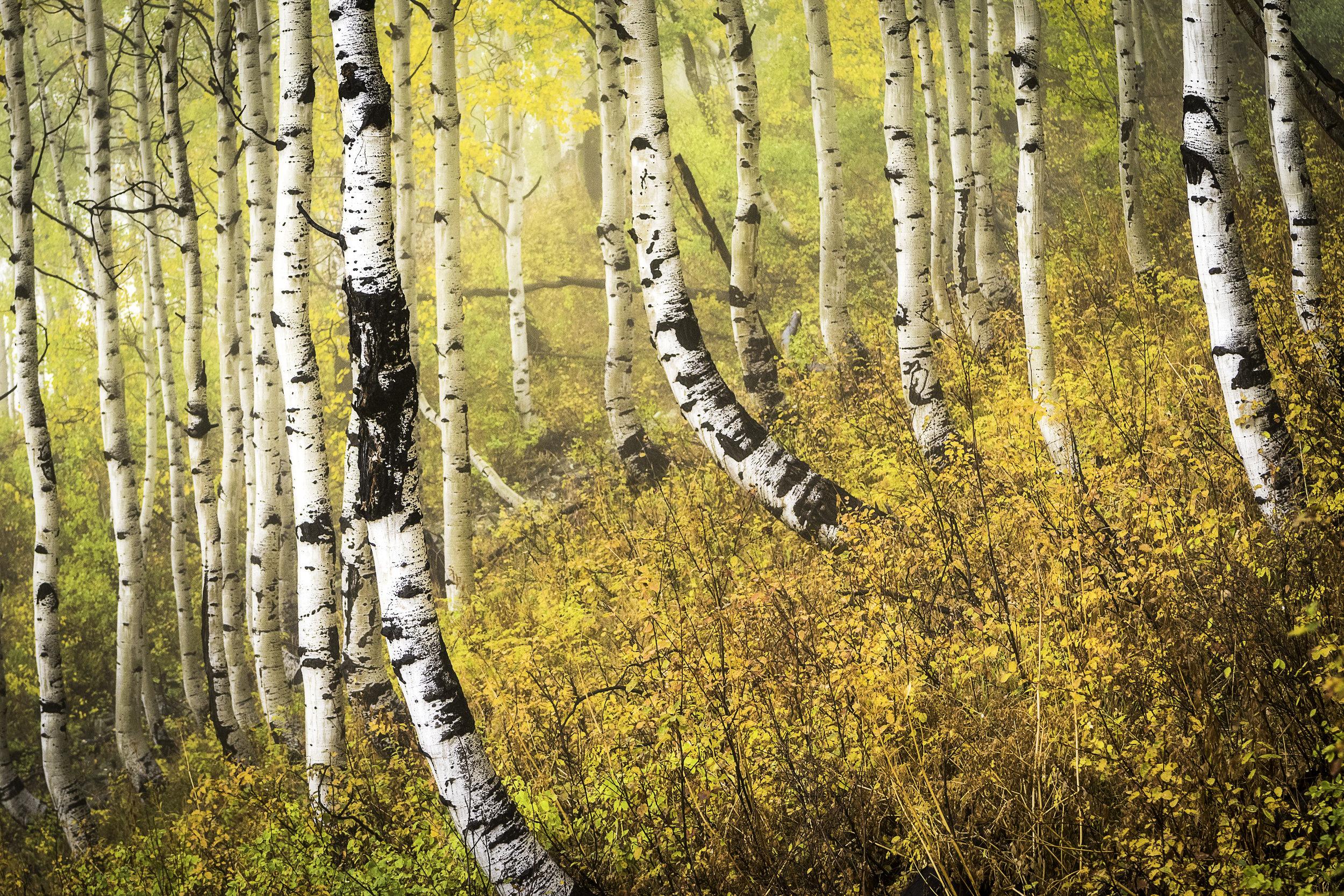 bendytrees.jpg