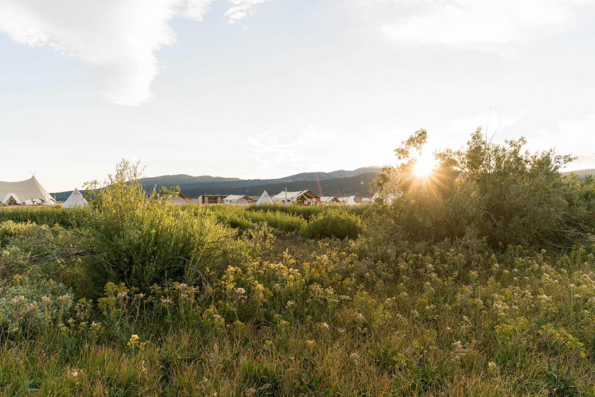 Under Canvas - Yellowstone, Montana